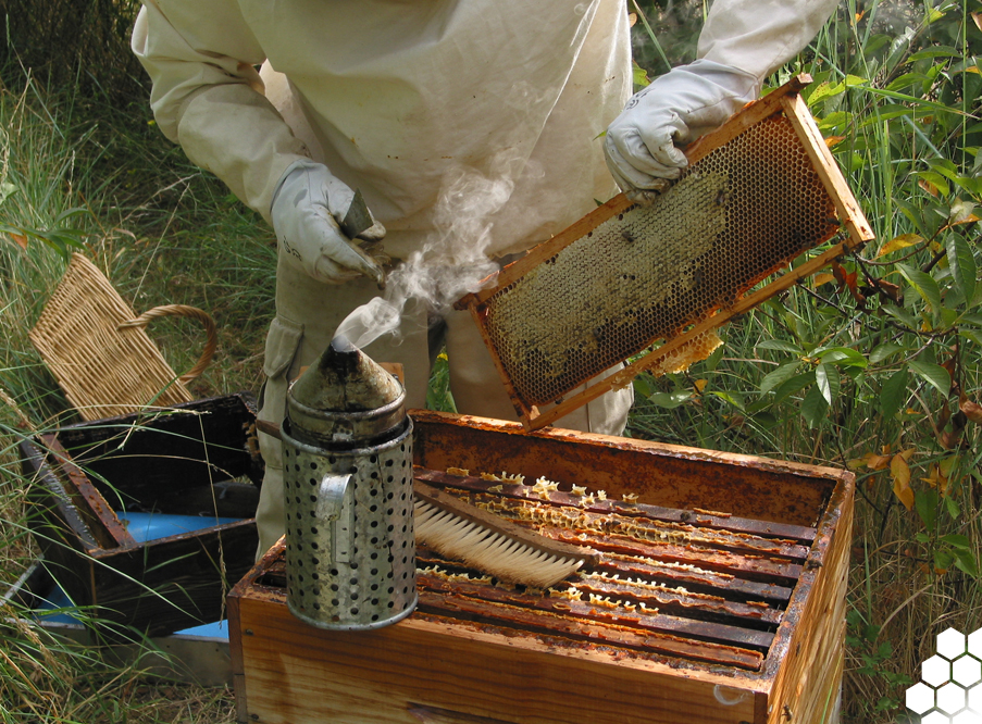 apiculteur tours