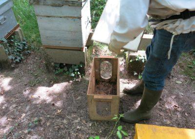 Placement du tamis sur une ruchette spéciale