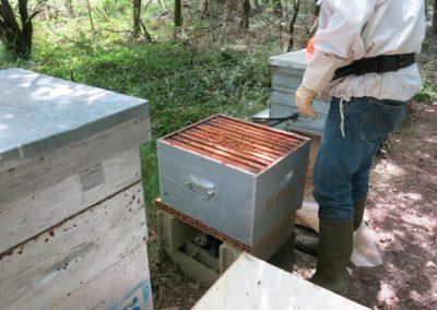 La ruche d'où l'on prend les abeilles
