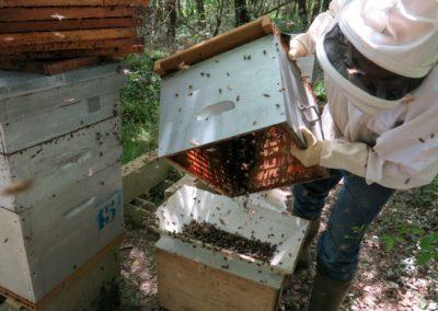 On vide les abeilles dans le tamis pour ne laisser passer que les ouvrières