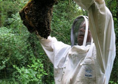 Le 11 juillet les abeilles ont déjà bien construit