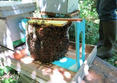 Il faudra beaucoup de fumée pour évacuer les abeilles !