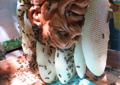 Les abeilles libèrent la sculpture